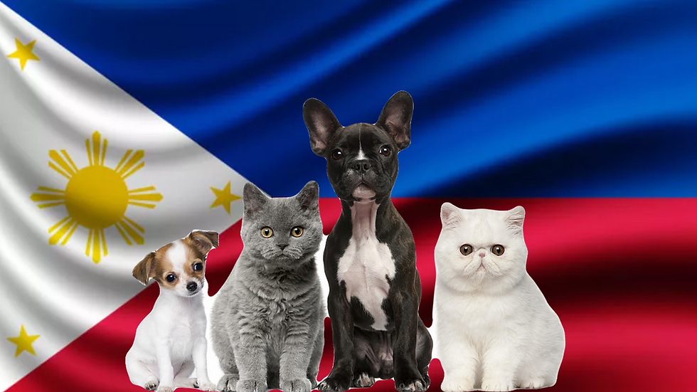 Pet package from the Philippines to Israel