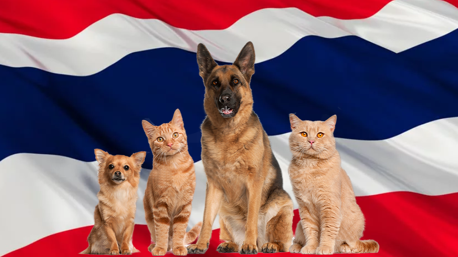 Pet package from Thailand to Israel