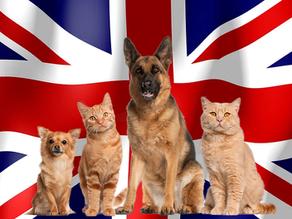 איך לטוס עם חתול או כלב מישראל לאנגליה
