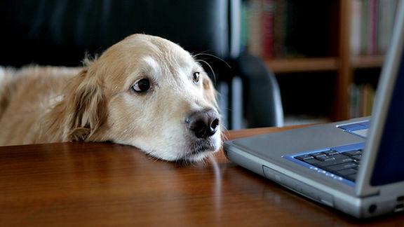 dog-computer-55281_0.jpg