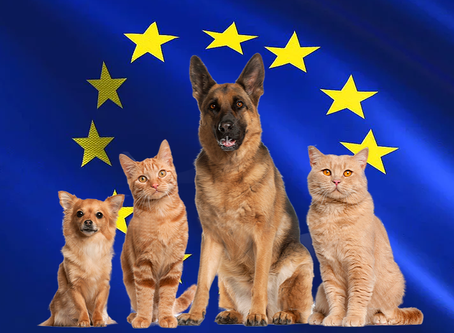 Bringing Your Pet From Israel Into European Union Countries