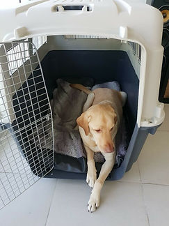 dog-in-travel-crate-768x1024.jpg