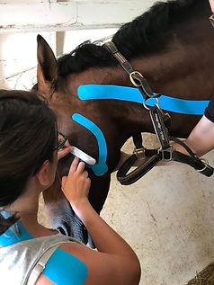 taping cheval