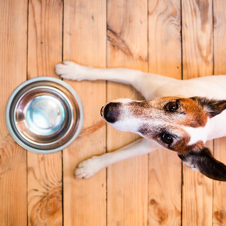 Nourrir son chien en conscience