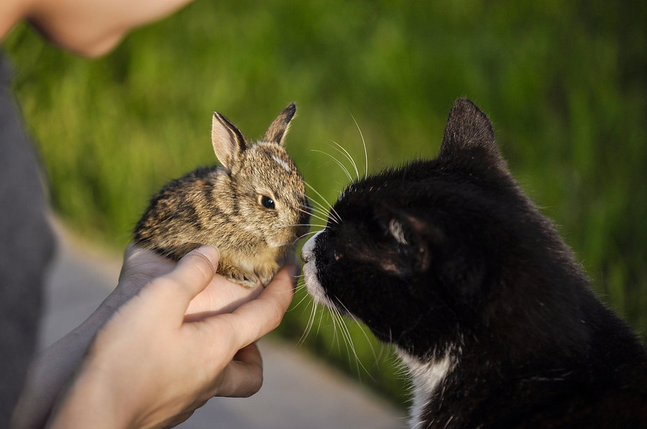 rabbit-3658549_1920.jpg