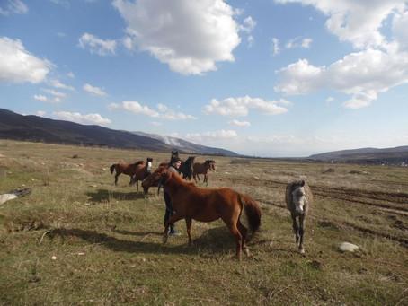 აპრილის კვირა ცხენებთან (თითქმის ეკოლოგიური ბლოგი)