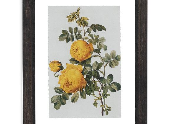 "Vintage Yellow Roses Floating Black II 12""x16.5"" Frame by Drew Barrymore Flower"