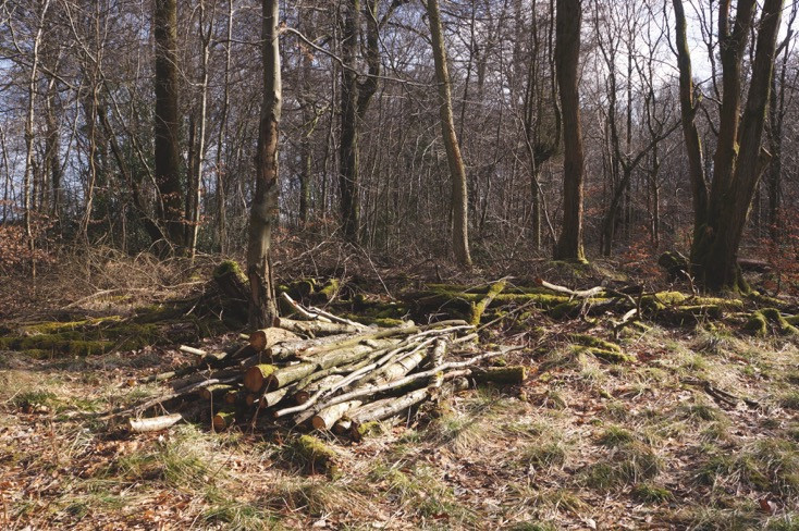 Oak and Larch Woodlands