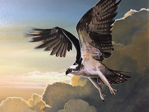 """Oliver: """"Hovering Osprey"""""""