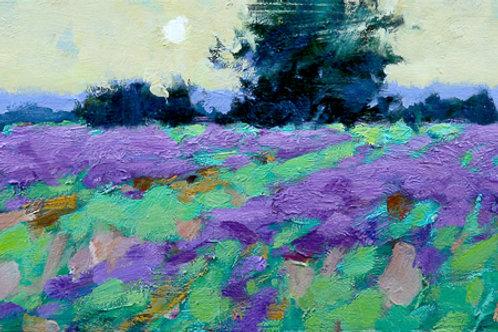 "Lee, Ning: ""Morning Lavender Field"""