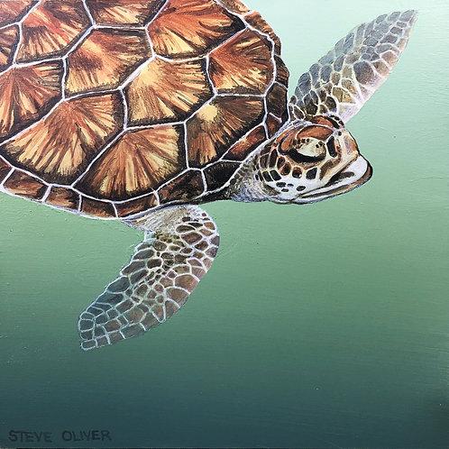 """Oliver: """"Hawksbill Sea Turtle"""""""