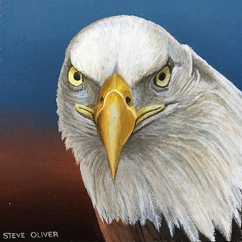 """Oliver: """"Bald Eagle"""""""
