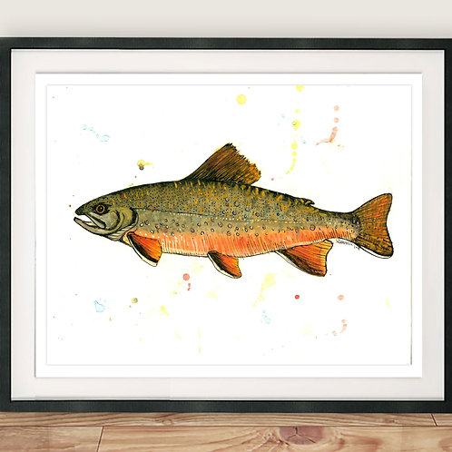 Brown Trout Illustration