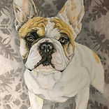 Who doesn't love a #Frenchie_ #petportra