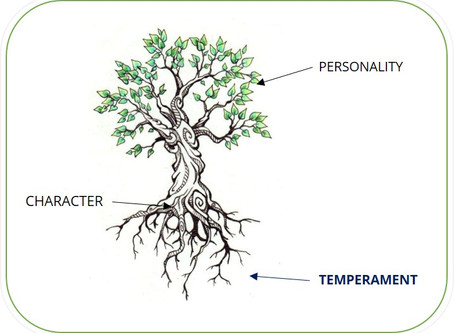 Temperament - Personality, Character, and Behavior
