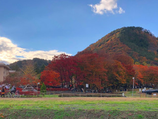 紅葉がピークです。