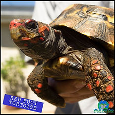 Let's all take a lesson from the tortois
