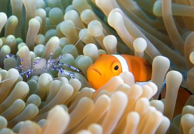 Magnificent species for divers in Vietnam