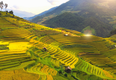 Colourful landscape of Mu Cang Chai by Jesse Pearlman