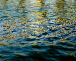 Gilded Seas No 1