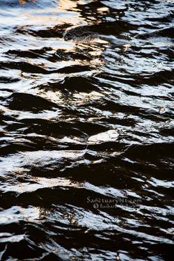 The River No 2