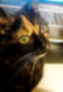 IMG_20130116_202412 crop-Miss Cokie clos