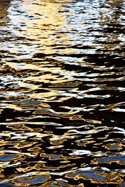 Brown Leopard Sea No 2