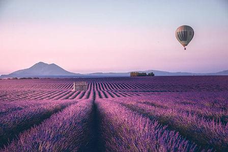 lavendar field balloon.jpg