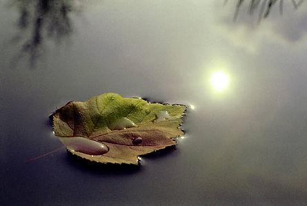 grief leaf.jpg