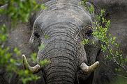 Summer elephant.jpg