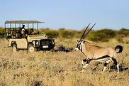Kalahari_2012-06-65.jpg