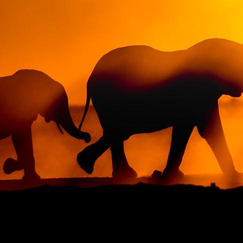 Sunset Elephant walk, Botswana