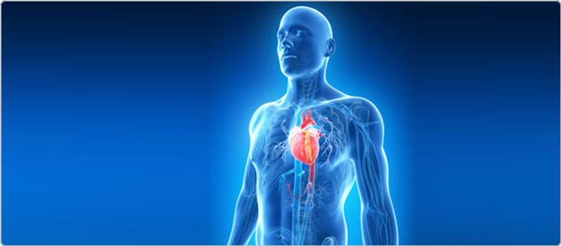 body and heart.jpg