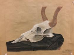 Conte Horse Skull