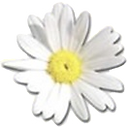 Logo%20Margrietje_edited.png