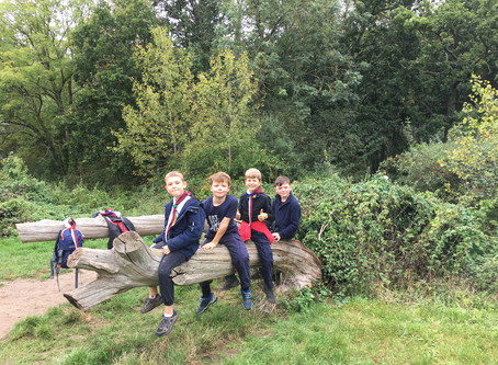 Worting Cubs go Wandering