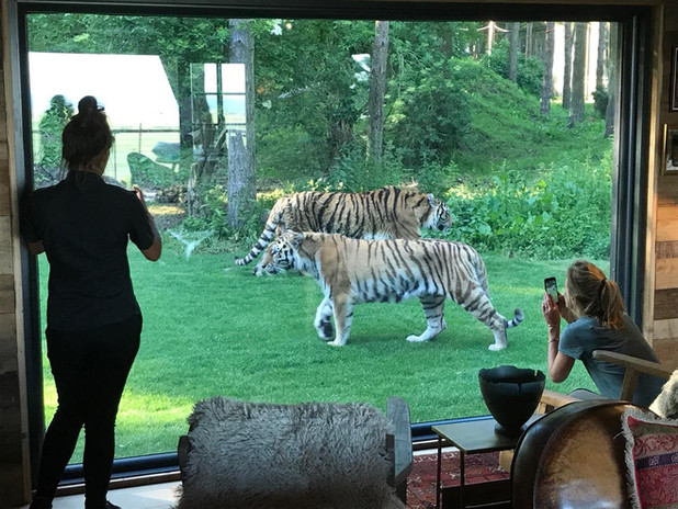 tiger lodge 2.jpg