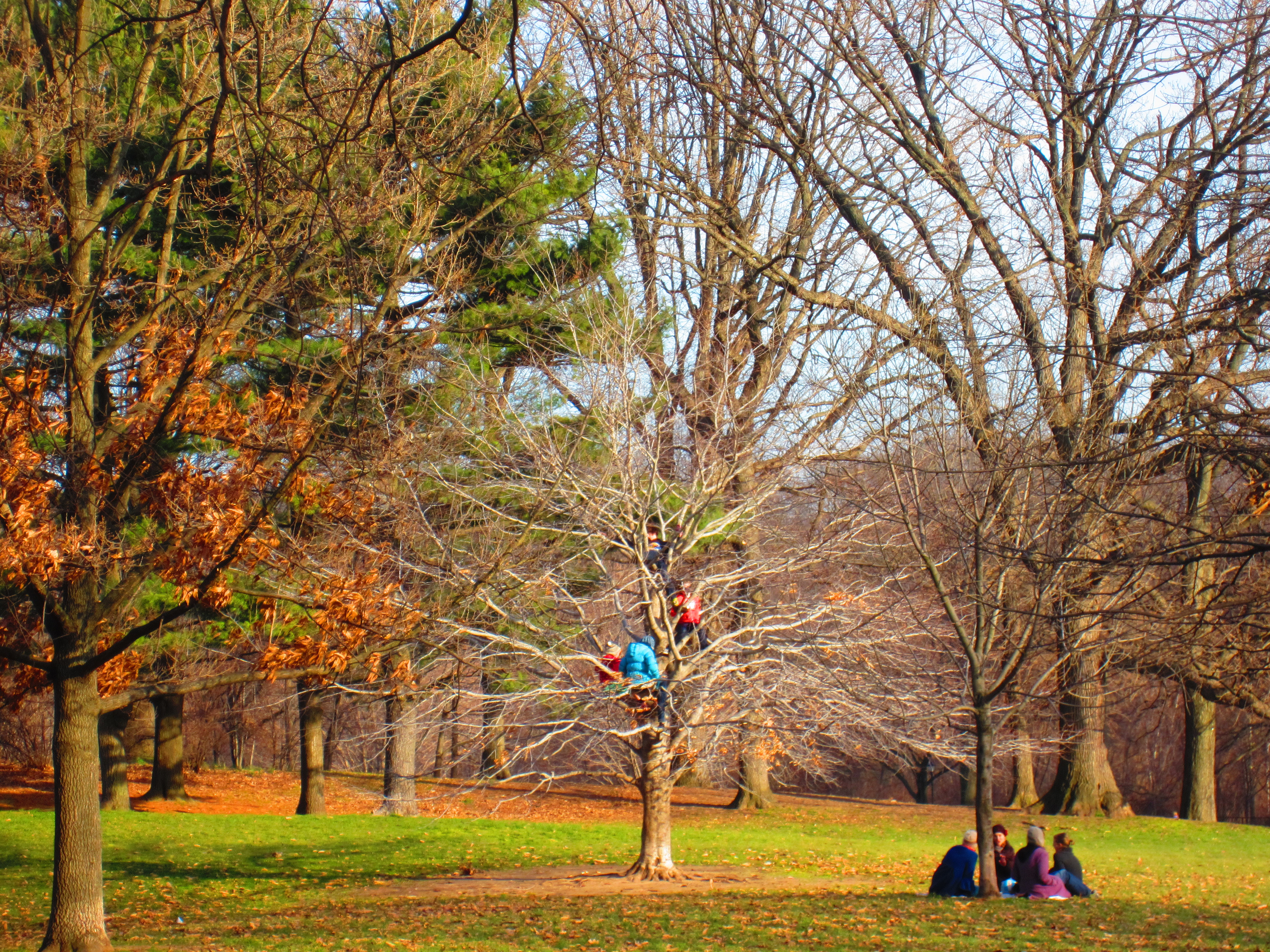 Climbing Trees in Prospect Park