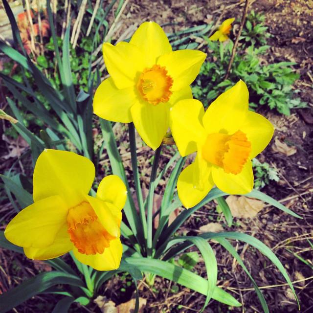 Back In Spring
