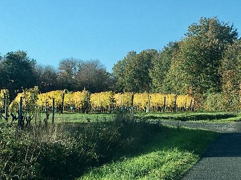 Vue des environs - Les vignes