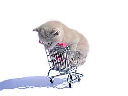shopping_cart_cat_white_animals-1178011.