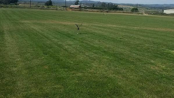 Mosby fields.jpg