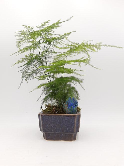 Asparagus dans son pot bleu