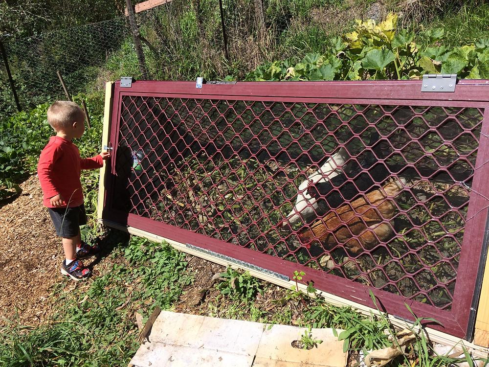 the girls at work, Farm Boy supervises