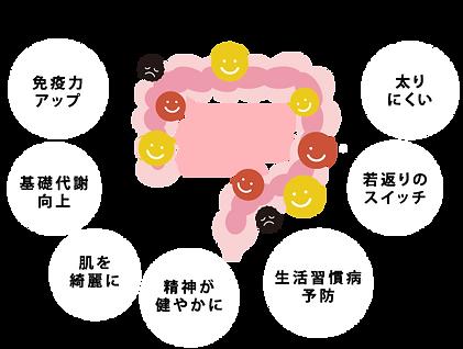 腸内フローラ.png