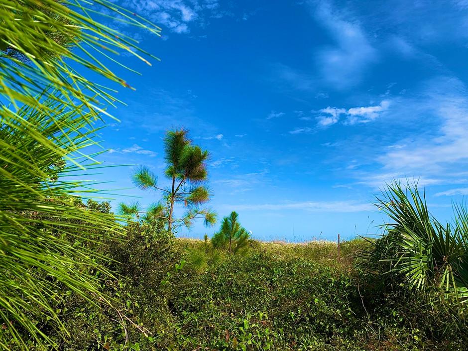 Getting ready to find your Hilton Head Island getaway