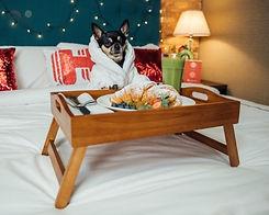 dog%20hotels%20hilton%20head_edited.jpg