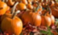 pumpkins_large_fb.jpg