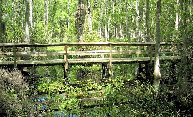 whooping crane pond conservancy hilton head island
