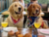 Dog%20friendly%20restaurants%20hilton%20